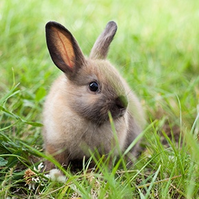 Warning signs of rabbit illness from Edgewood Veterinary Group