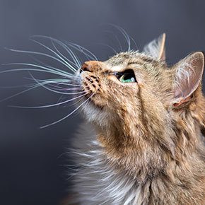 Edgewood Veterinary Group uncovers noise anxiety in cats