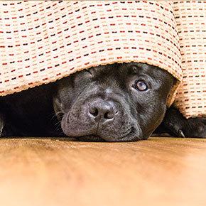 Tips to help your dog through firework season