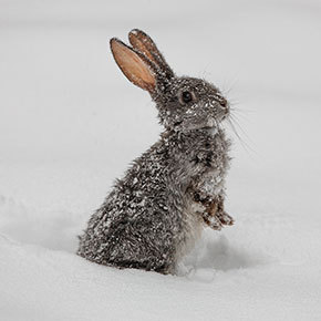 Advice from Edgewood Vets on snug winter rabbits
