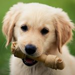 Dog treats – the bones of the issue from Edgewood Vets