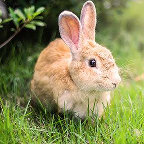 Keeping a happy bunny in Essex