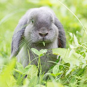 Lifesaving dental advice for rabbits from Edgewood Vets