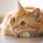 Keep your cat worm-free with Edgewood Vets