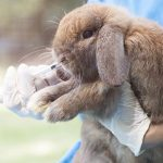 Protect your rabbit this spring with Edgewood Vets
