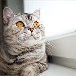 Edgewood Vet's tips for a healthy feline heart