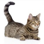 What's your cat's tail telling you?