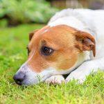 Ask Jürgen for canine constipation advice