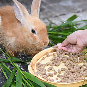 Rabbit diet tips from Edgewood Vets