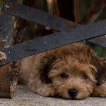 Is your dog afraid of loud noises?