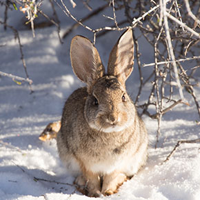 Winter care tips for rabbits in Essex