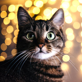 Christmas treats for cats: Edgewood Vet's top three