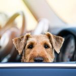 Travelling with your dog for New Year