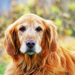 Edgewood Vet's advice for owners of older dogs