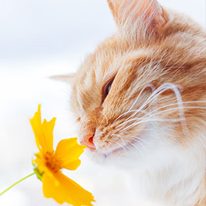 Our advice for easing seasonal allergies in cats