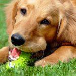 Doggy dental checks in Purleigh