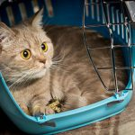 Light night care for cats with Edgewood Veterinary Group