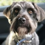Prepare your dog to move with Edgewood Veterinary Group