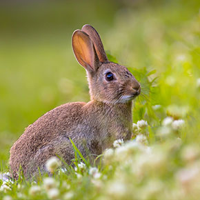 Protect your rabbit this summer with Edgewood Veterinary Group