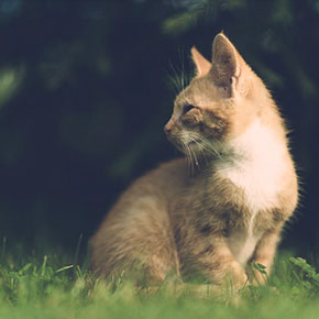 Cats and heat stroke advice from Edgewood Vets