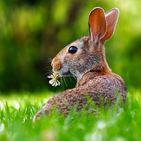 Outdoor rabbit advice from Edgewood Vets