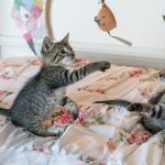 Vital tips for new kittens in Purleigh
