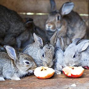 Perfect picks for rabbit treats in Essex