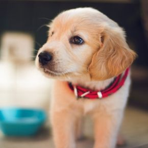Are you expecting the pitter-patter of tiny paws in Essex?