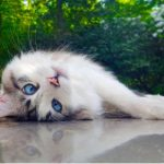 Your guide to a happy cat, by Edgewood Vets