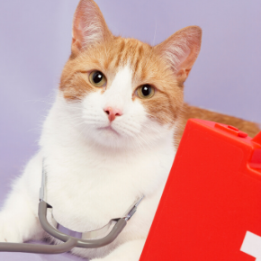 Learn what to do in a cat health emergency with Edgewood Veterinary Group.