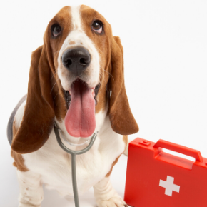 Head vet Jürgen explains how to recognise 7 conditions that require first aid for dogs.