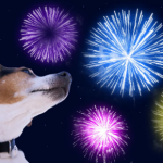 Prepare your pet in time for fireworks night with advice from our head vet Jürgen Theinert.