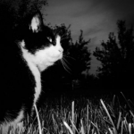 Edgewood Veterinary Group has some dark night safety advice for cat owners.