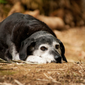 Jürgen Theinert recommends 5 things to look out for in older dogs