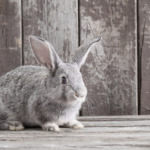 How to provide senior rabbit care for healthy & happy bunnies