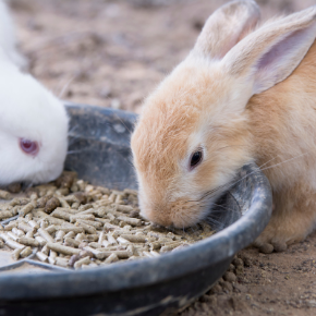 Edgewood Vets rabbit meal planner is perfect for the new year