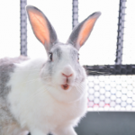 Rabbit owners in Essex need this life-saving dental advice