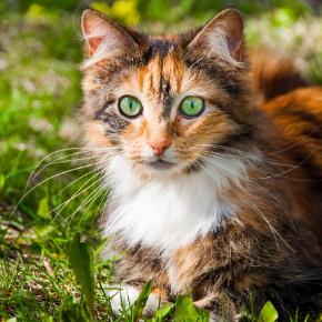 How to check your cat for fleas and flea dirt