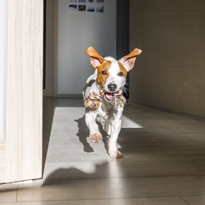 Petcare basics every new dog owner needs to understand