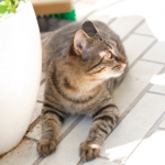 8 summer dangers cats owners in Essex need to know about