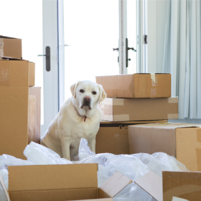 Edgewood Vets' tips for moving house with your dog