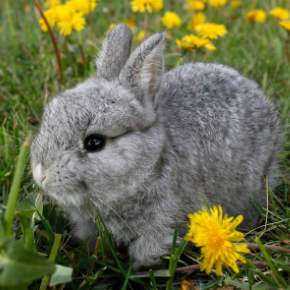 Edgewood Vets list of poisonous plants for rabbits could save your pet