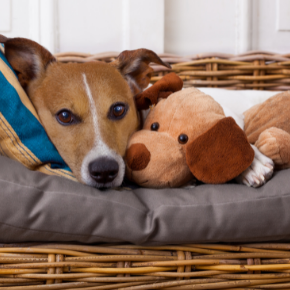 Read Edgewood Vets' advice on dog neutering