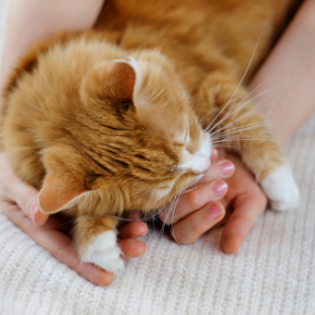 Why choose Edgewood Veterinary Group for your cat's care