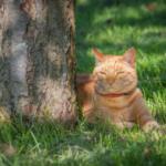 Jürgen Theinert recommends ways to cool cats down in summer