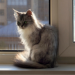 How do I tell if my cat is in pain?