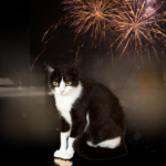 Get our 'November noise tick list' for cat owners