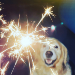 Dog owners should take action now to prepare their pet for 'Fireworks' season